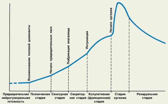 Сексуальные циклы мужчин и женщин