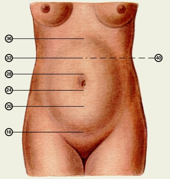 Симптом Хегара (Ранний Признак Беременности)