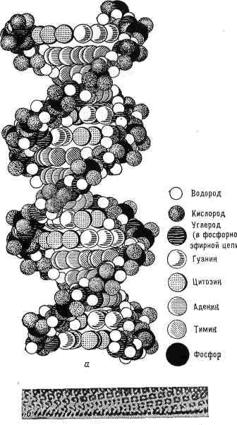 Молекула днк рисунок