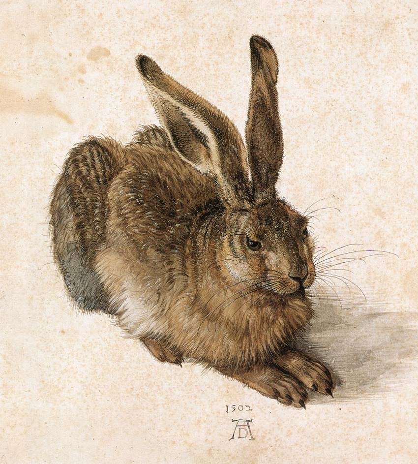 A Young Hare, 1502