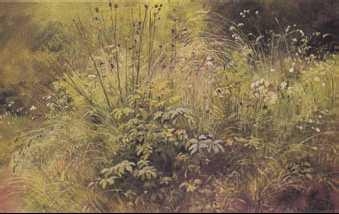 И и шишкин травки 1892 г