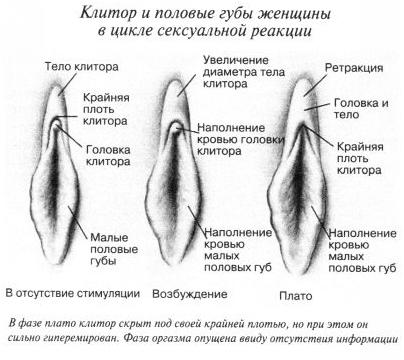 фото положение полового члена во влогалище