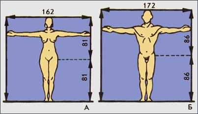Рис. Антропометрия. Биотип женщины (а) и мужчины (б) по Ж. Декеру и Ж. Думику. Длина верхней части тела равна длине нижней. Размах рук равен длине тела.