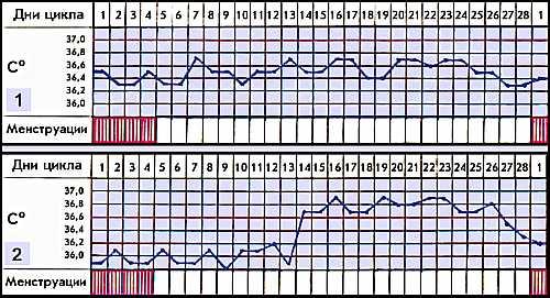 Слизистая оболочка матки в этот период претерпевает ряд изменений: десквамацию (слущивание), проявляющуюся собственно кровотечением и совпадающую с началом обратного развития жёлтого тела в яичнике; регенерацию (восстановление), начинающуюся ещё в период менструации и заканчивающуюся обычно к 5-6-му дню цикла; пролиферацию (разрастание), совпадающую с процессом созревания фолликула; секрецию, совпадающую с фазой развития жёлтого тела, в результате чего создаются благоприятные условия для внедрения и развития зародыша.Причинами нарушения менструального цикла могут быть тяжёлые инфекционные болезни, гиповитаминоз, интоксикации, профессиональные, сердечно-сосудистые заболевания, болезни крови, печени, почек, психическая травма, нервное перенапряжение, эндокринные заболевания, поражения гипофиза, воспалительные заболевания матки и придатков, повреждения матки (например, при искусственном аборте).