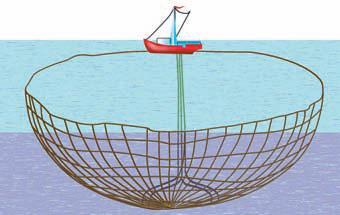 купить планктон для ловли толстолоба