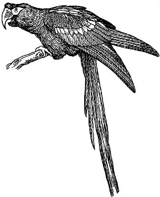 Красно-синий ара.