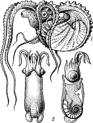 Головоногие моллюски.