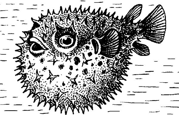 Ёж-рыба.