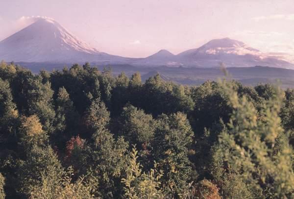 Лес в долине реки Камчатка.