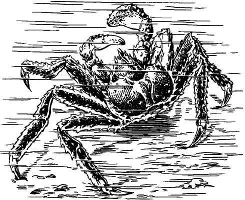 Камчатский краб.