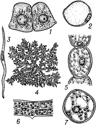 Разнообразие животных и растительных клеток.