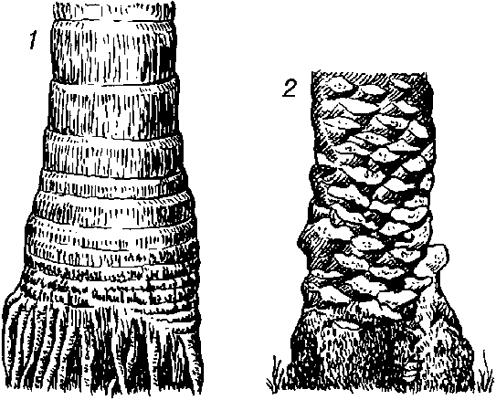 Стволы пальм.