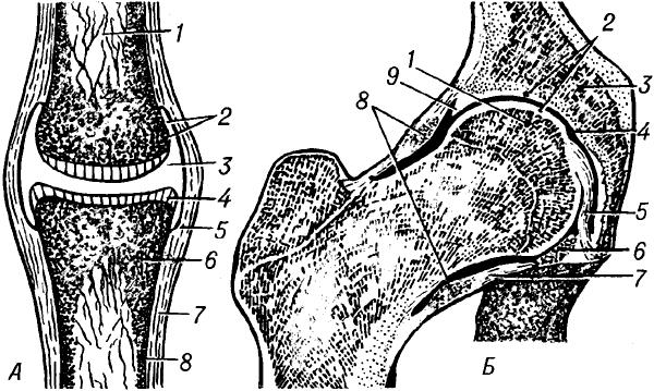 Схематическое изображение простого сустава.