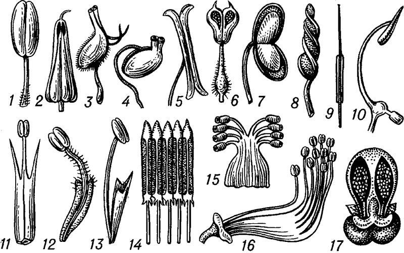 Тычинки разных растений.