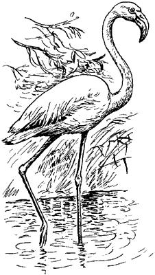 Красный фламинго.