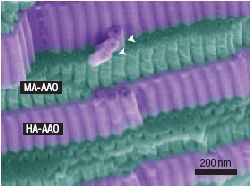 Мембраны анодированного оксида алюминия (АОА) обладают однородной пористой структурой с гексагональн