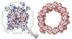 Взаимодействие ДНК со структурными белками-гистонами.