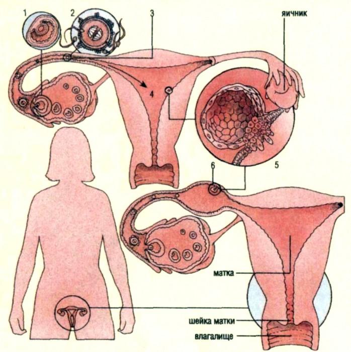 Внематочная беременность это что