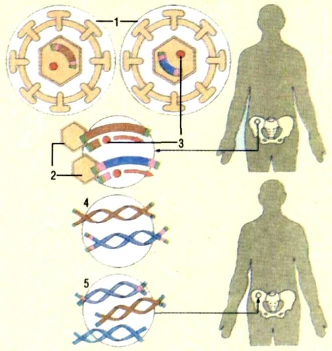 Терапия Генная