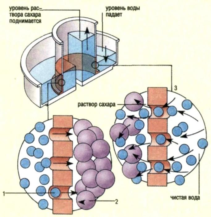 Мембрана полупроницаемая фото