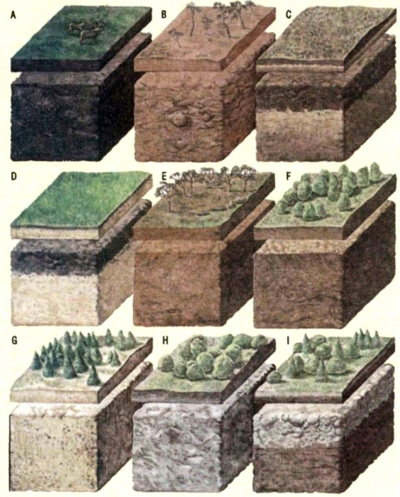 Почвы формировались по мере