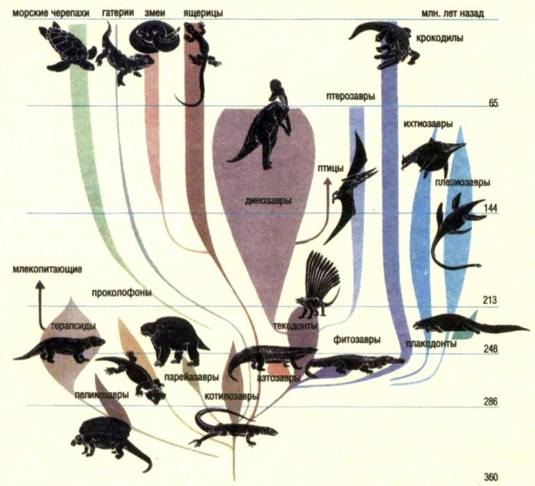 Котилозавры
