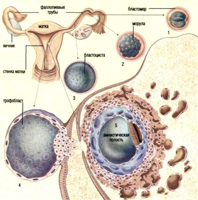 фото сперма животных: