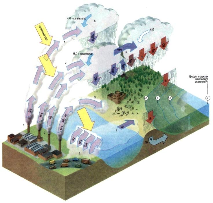 Экология человека. м. rain звёздный дождь кислотный дождь метеоритный дождь метеорный дождь радиоактивный дождь...