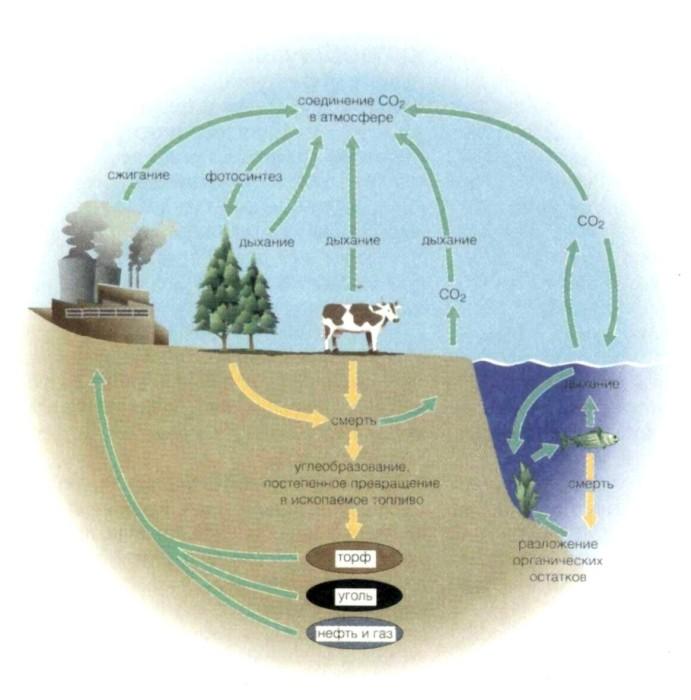Схема углерод в природе 280