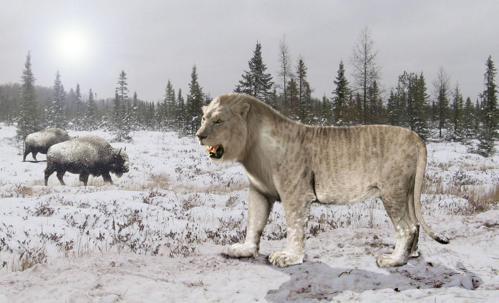 Картинки по запросу доисторический Пещерный лев