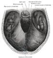 Сегменты внутренней сонной артерии