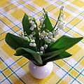 Ландыш майский — Convallaria majalis L.