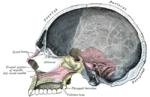 Мыщелковый канал затылочной кости