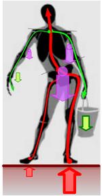 Физическое упражнение (понятие), Содержание и форма физических упражнений