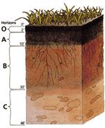Разрез почвы схема