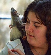 Curiosity Rats  Curious V Productions