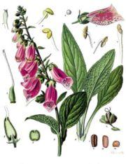 Medical Encyclopedia D MedlinePlus