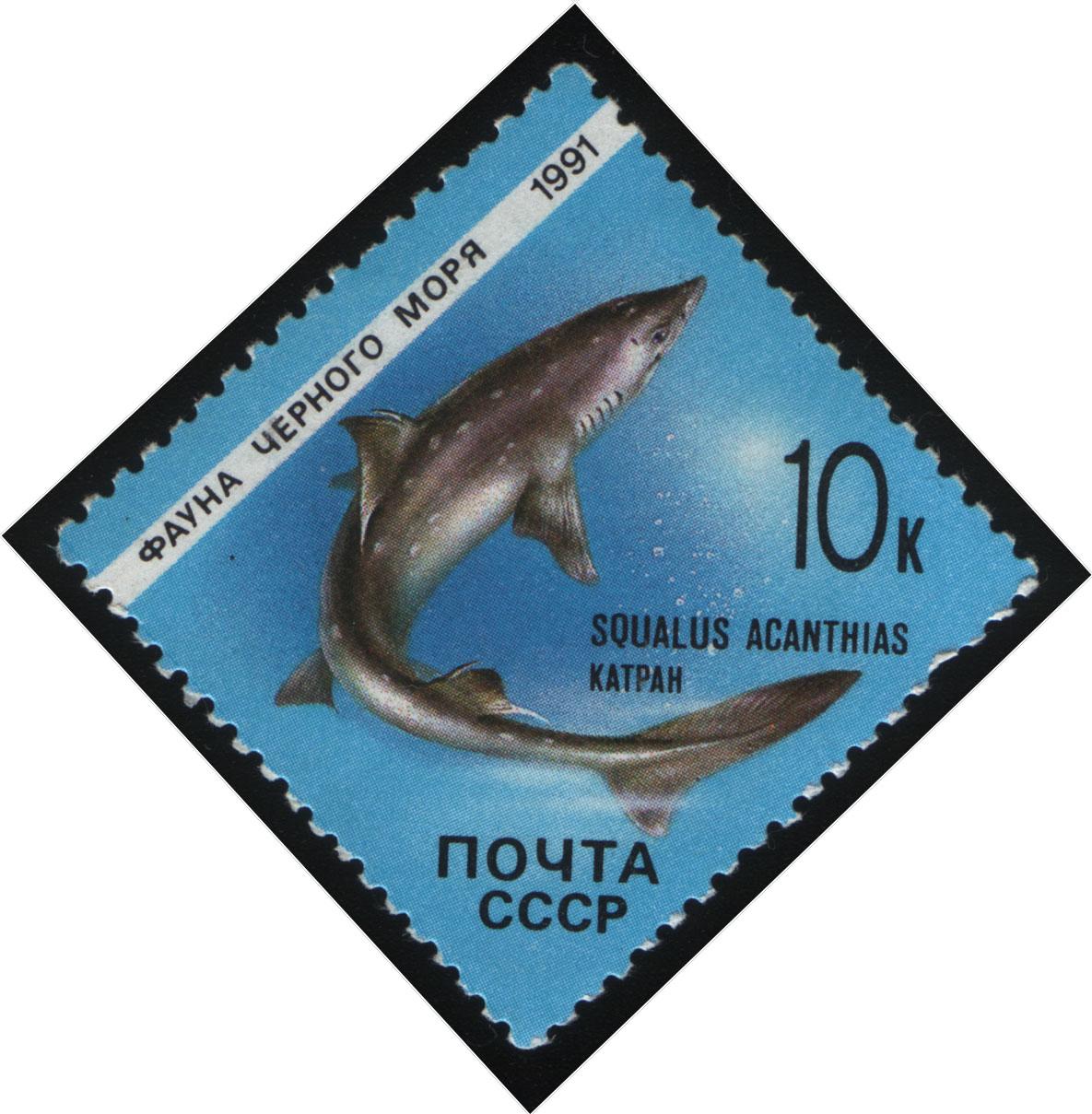 Короткопёрая колючая акула