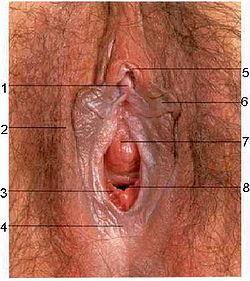 щель половых губ у простых девок фото частное
