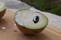 Sapodilla fruit.jpg