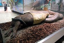 Гигантская южная анаконда