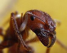 К какой группе животных относится муравей