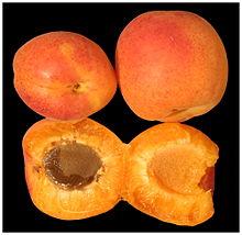 Происхождение распространение и польза армянского абрикоса