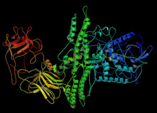 Ботулинический нейротоксин типа A-гемагглютинин комплекс