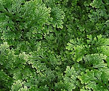 Растения мирового океана – названия и виды растительного мира