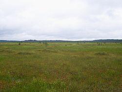 болото старосельский мох фото
