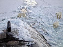 250px-Polar_bears_near_north_pole Медведь белый - это... Что такое Медведь белый?