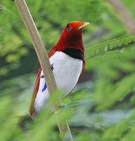 А в Дивном саду Дивного Королевства птицы должны быть только райские.