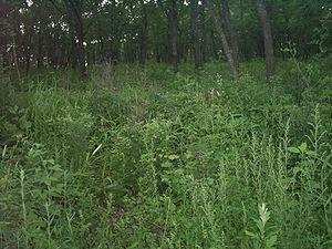Виды и особенности травянистых растений