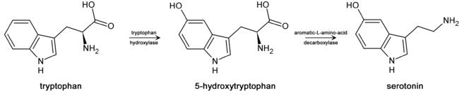 Метаболизм триптофана в серотонин